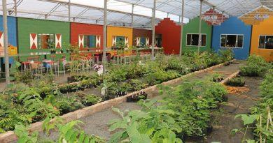 Produtores de Holambra abrem estufas de flores e plantas para turistas no fim de semana